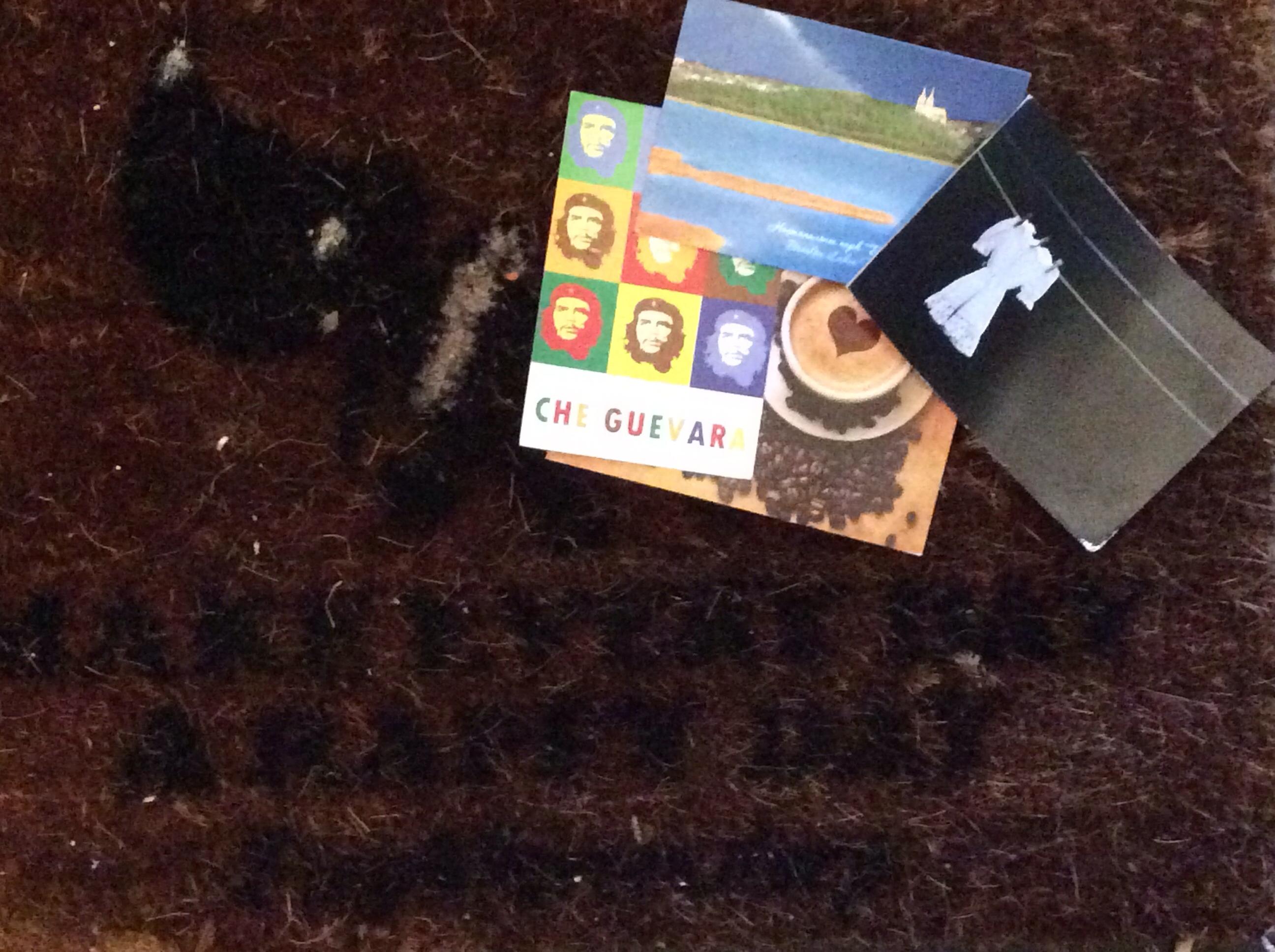 Postkaarten Boomhut aan Zee